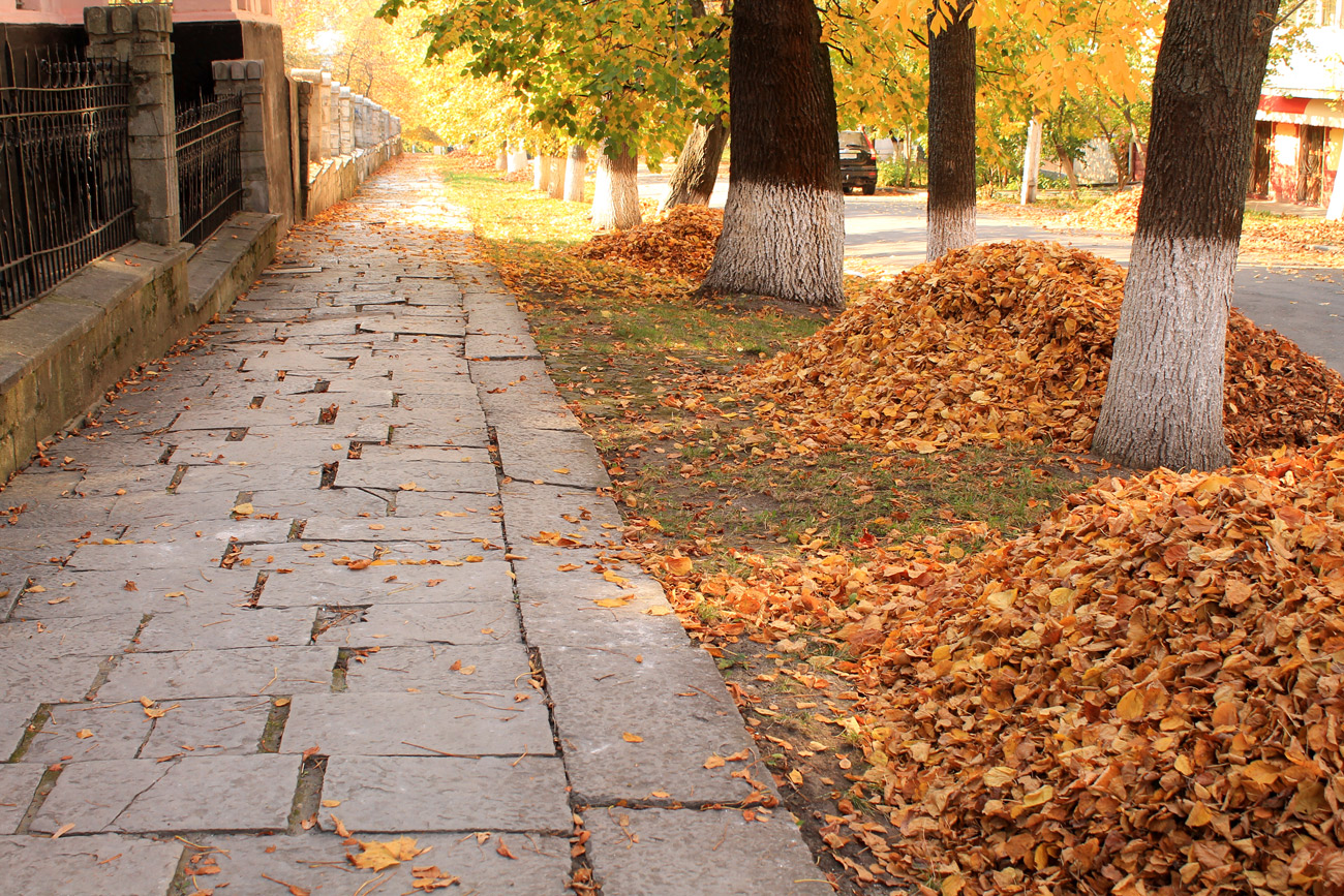 piles of leaves between trees at the curb