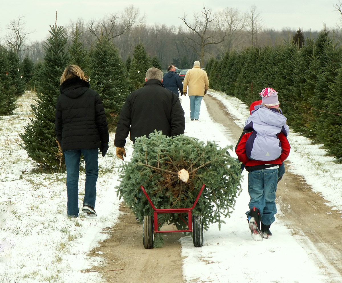 family with cut tree on sleigh